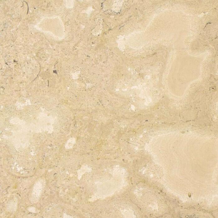 Coralli Petrosi